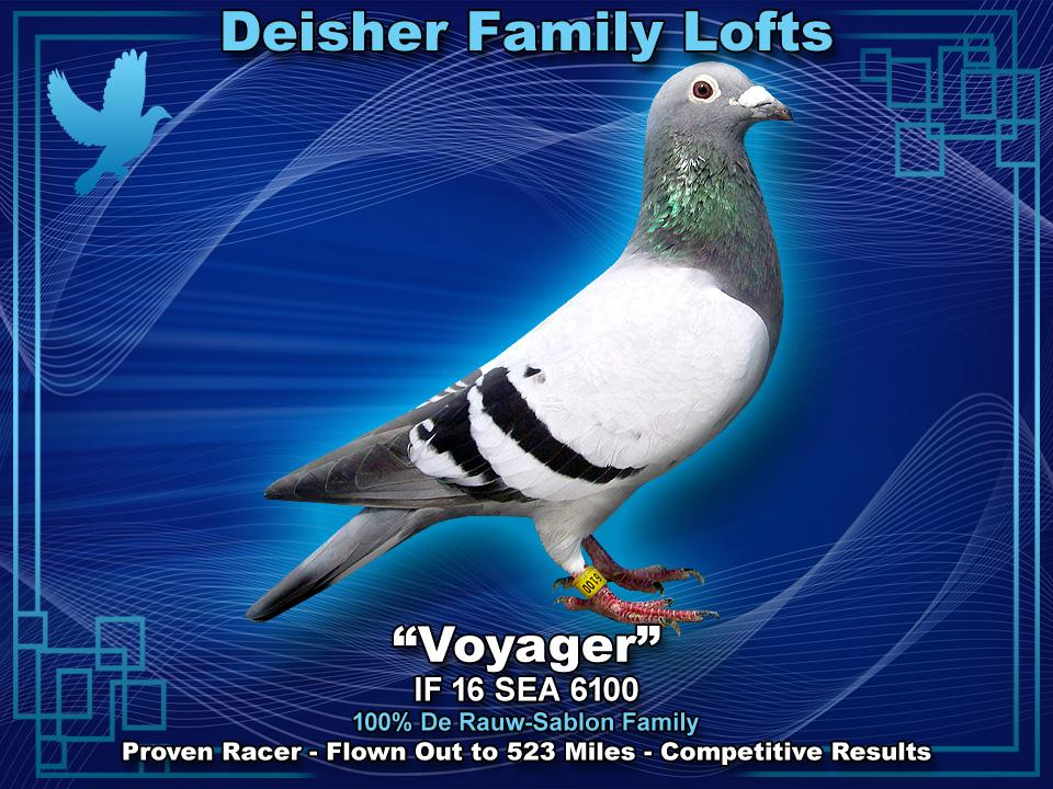VOYAGER IF 16 SEA 6100