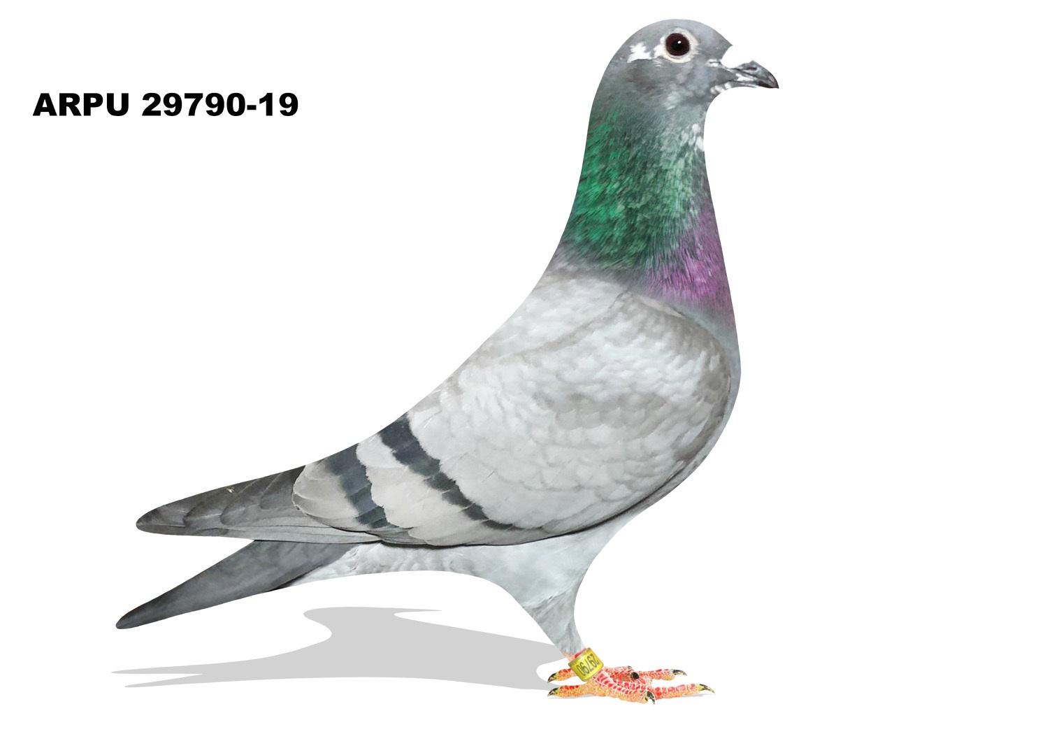 ARPU 29790-19 BB