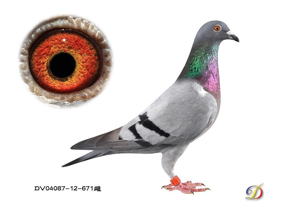 Dv4087-12-671(Hen) Mr Kannibaal X Kaasboer