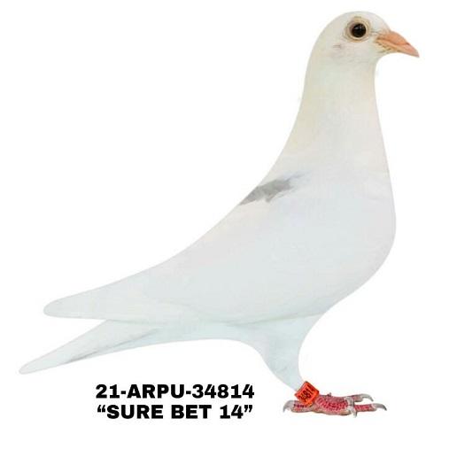 21-ARPU-34814 White SPL Cock.