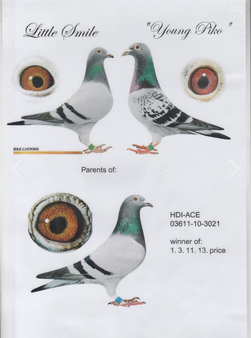 DV 03611-10-3021 Hen