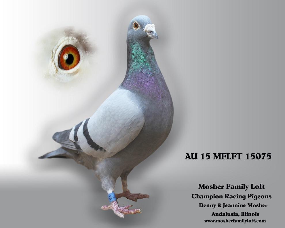 AU 15 MFLFT 15075   Cock