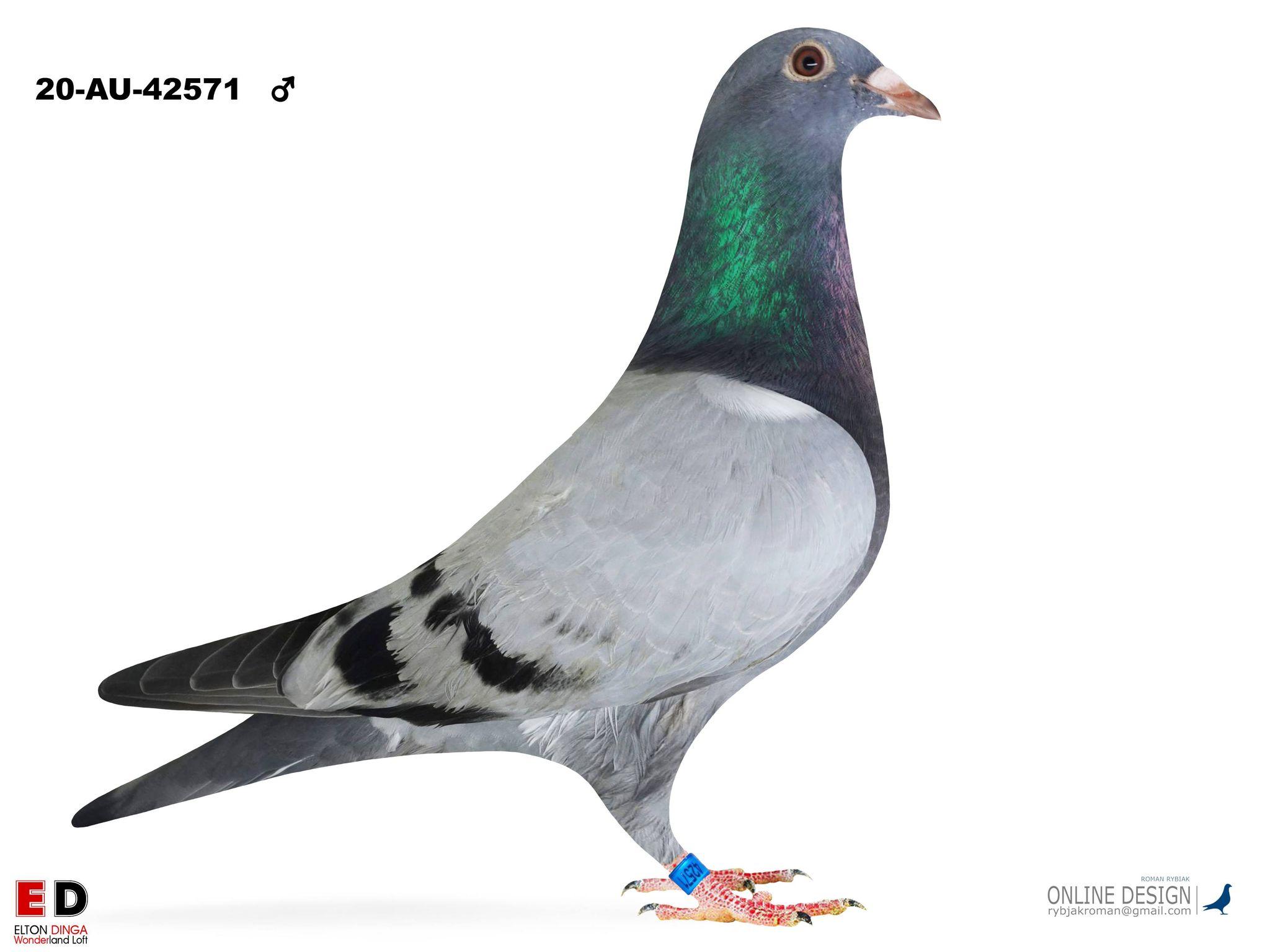 Brother Konsi/Maxxi 42571, Cock