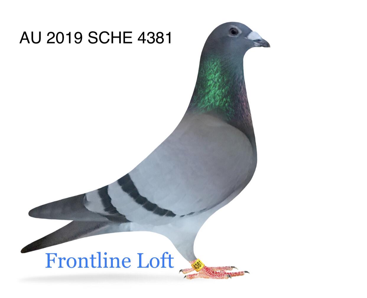 AU 2019 SCHE 4381 Cock