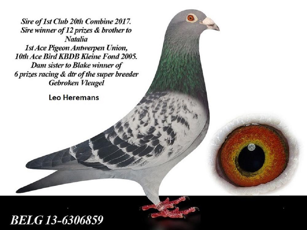 """2013 BELG 6306859 Blue Check Cock """"BLACK PANTHER"""", original Leo Heremans,"""