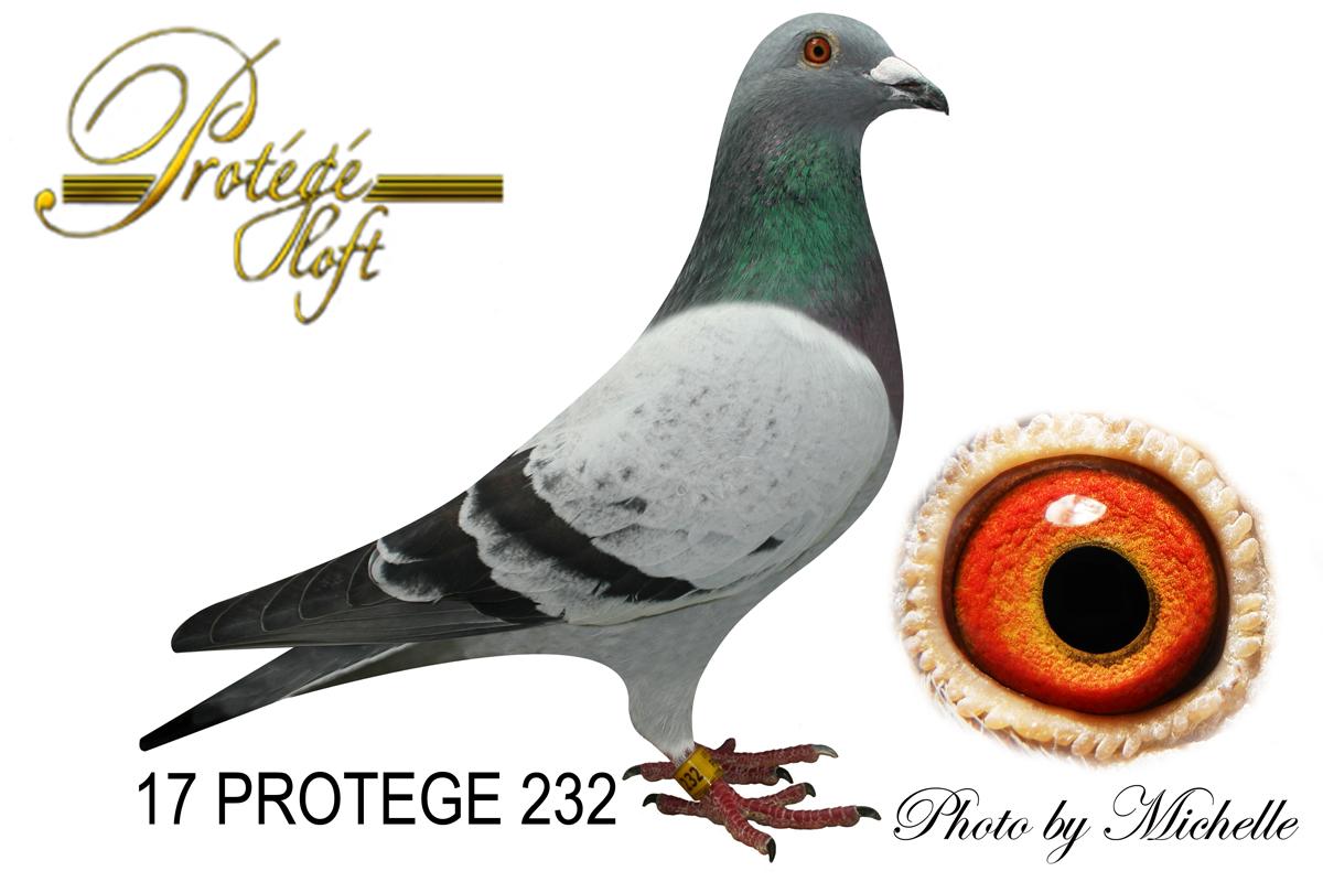17 PROTEGE 232 PENCIL COCK