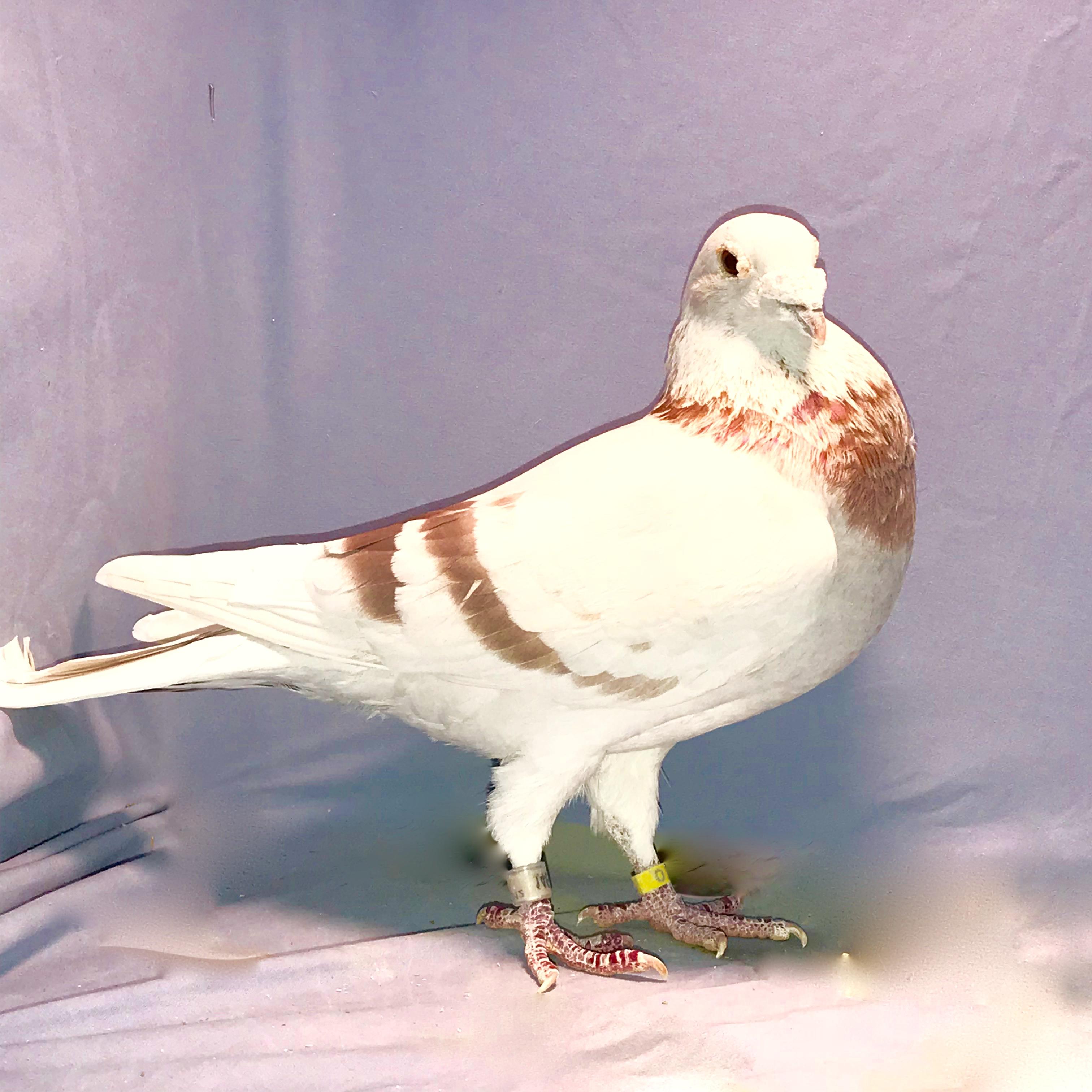 Buy 2-birds $120. pair birds only