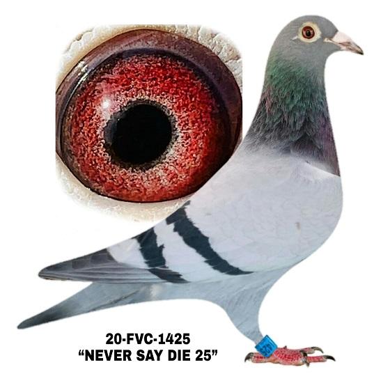 20-FVC-1425 BB Hen.