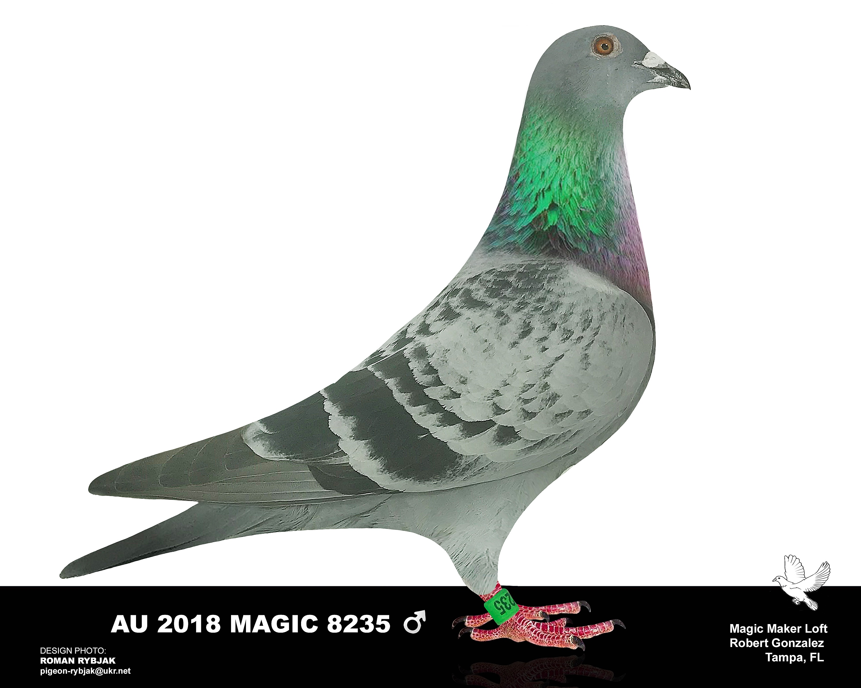 AU 2018 Magic 8235 BC cock