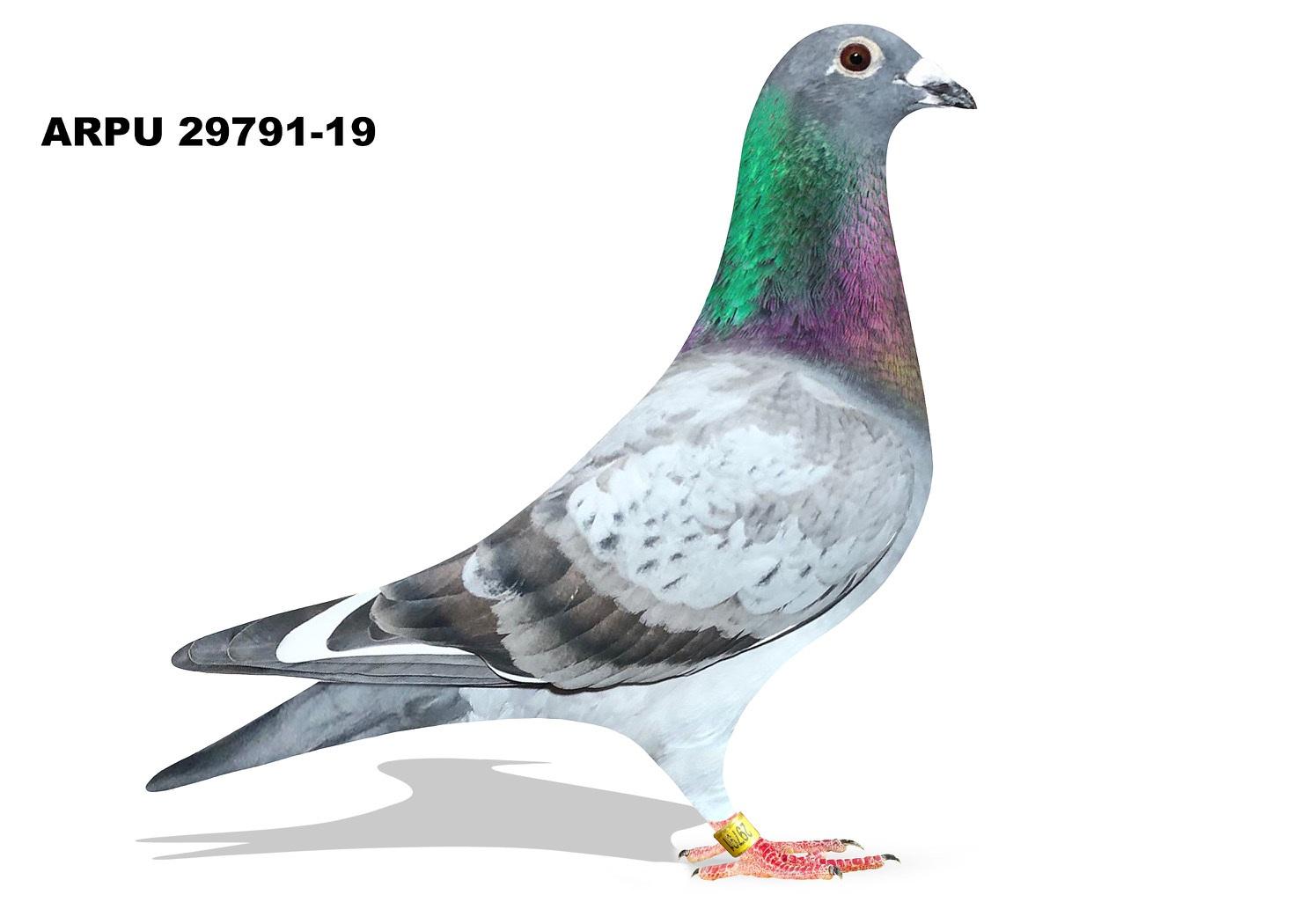 ARPU 29791-19 BBWF Cock (Greek/Baldwin&Tilson)