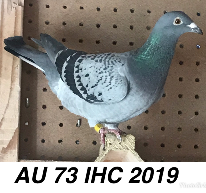 Au 73 IHC 2019 it's also a daughter from King Barcelona