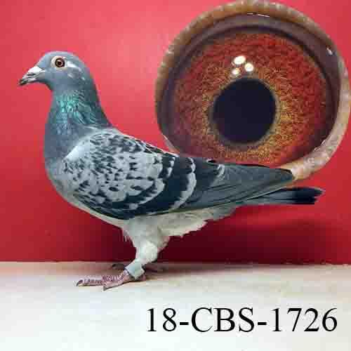 18-CBS-1726 BC/HEN