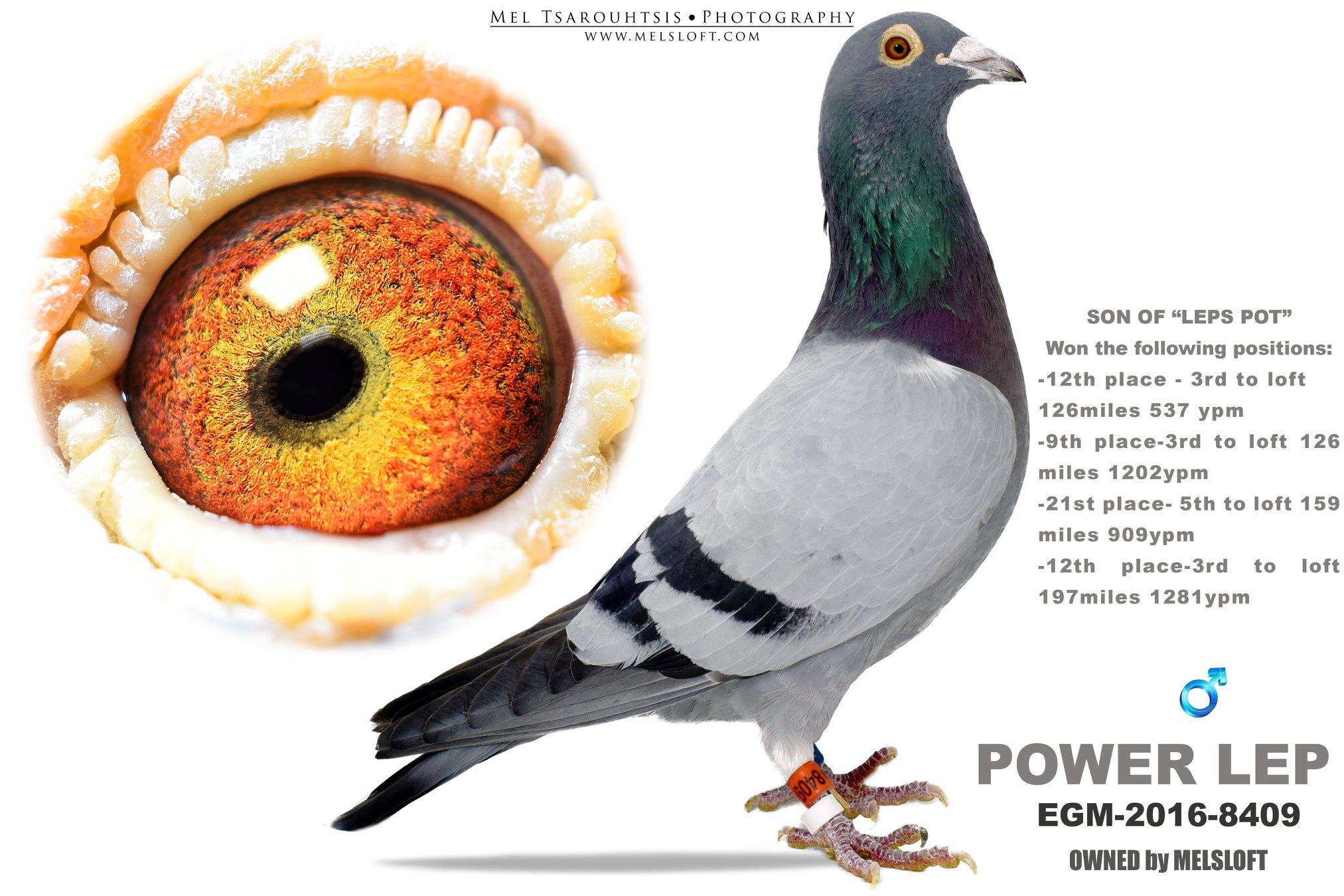 2016 EGM 8409 POWER LEP