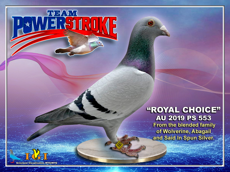 AU 19 PS 553  Royal Choice BBC