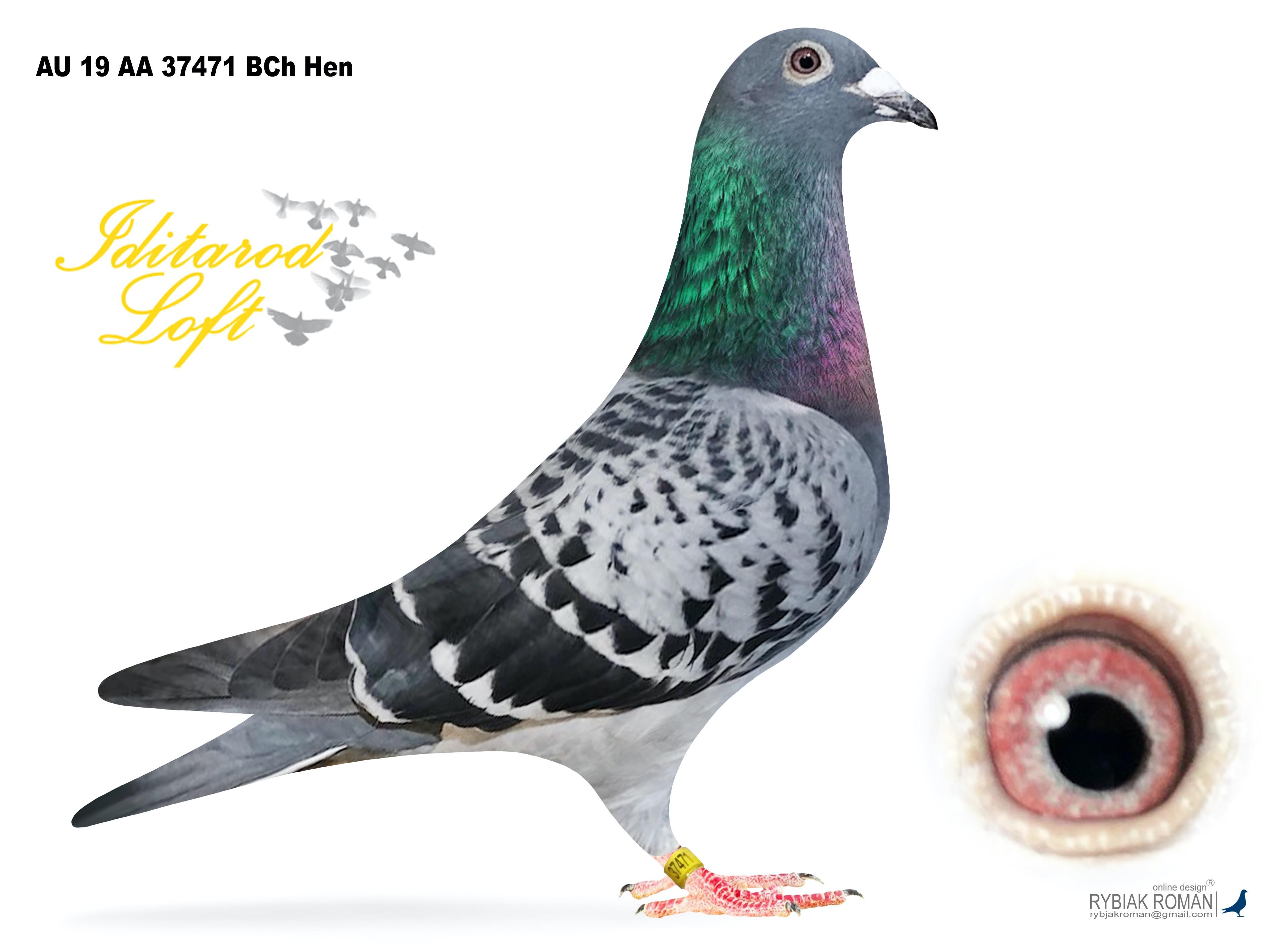 AU 19 AA 37471 BCh Hen
