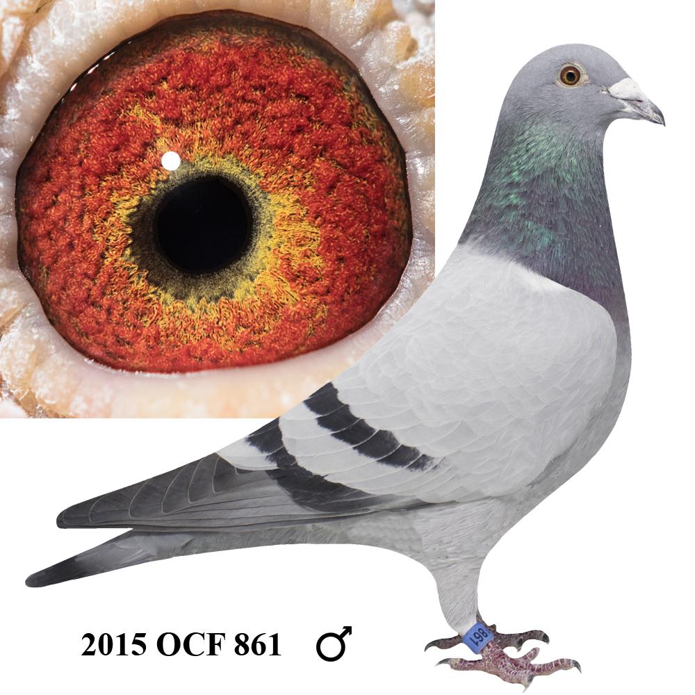 2015 OCF 861 Blue Bar Cock
