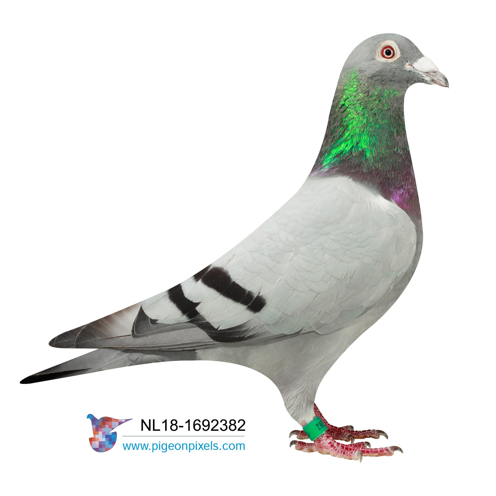 "NL2018-1692382 ""LOUIS 382"" BLUE COCK"