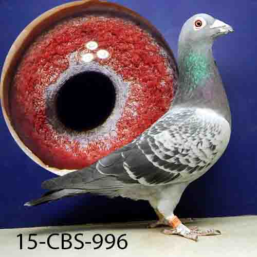 15-CBS-996 BC Cock
