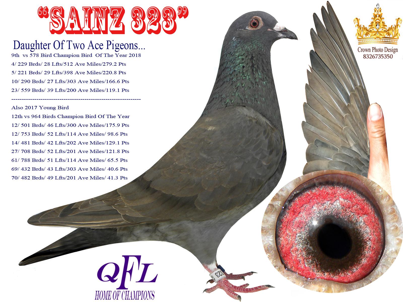 Au 17 Sainz 323 Black Hen