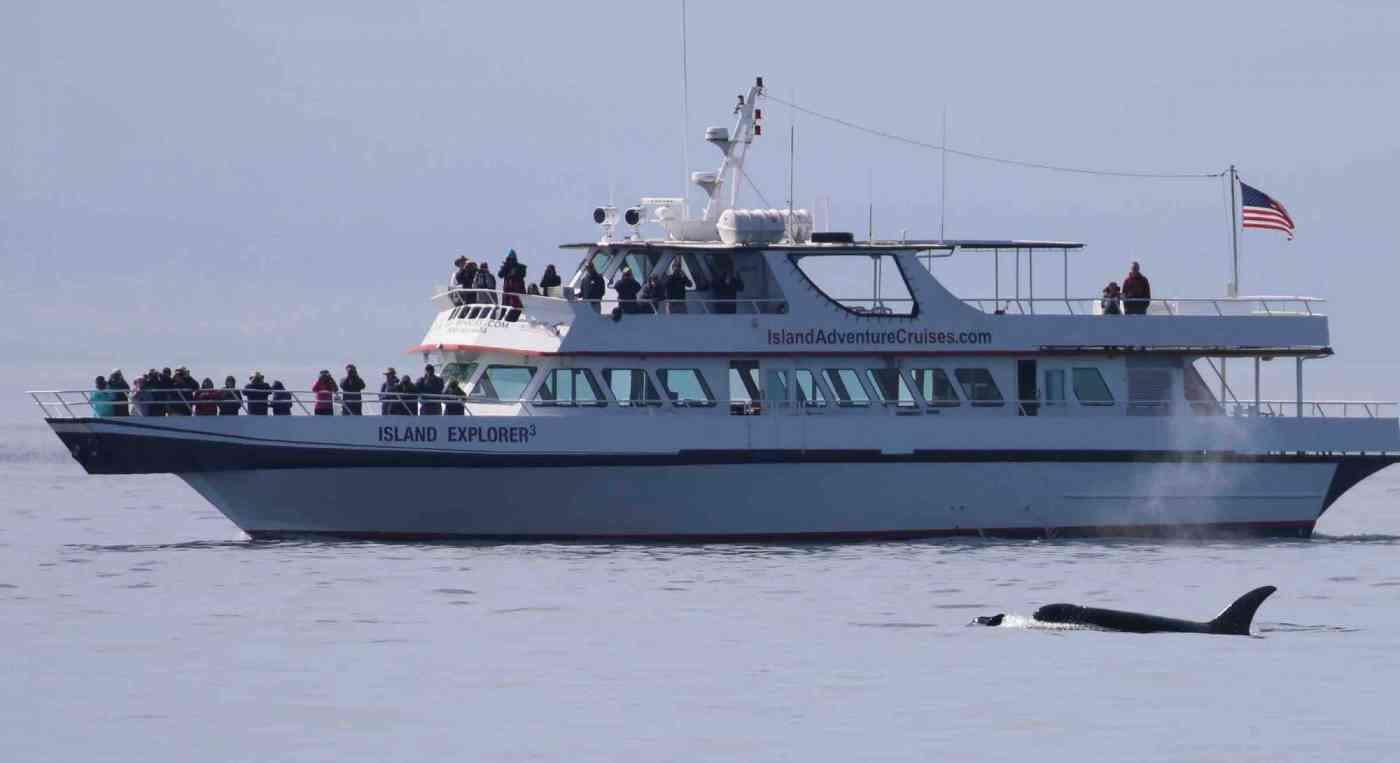 Washington State Whale Watching Island Explorer 3