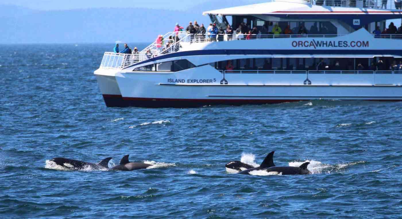 Washington State Whale Watching Island Explorer 5