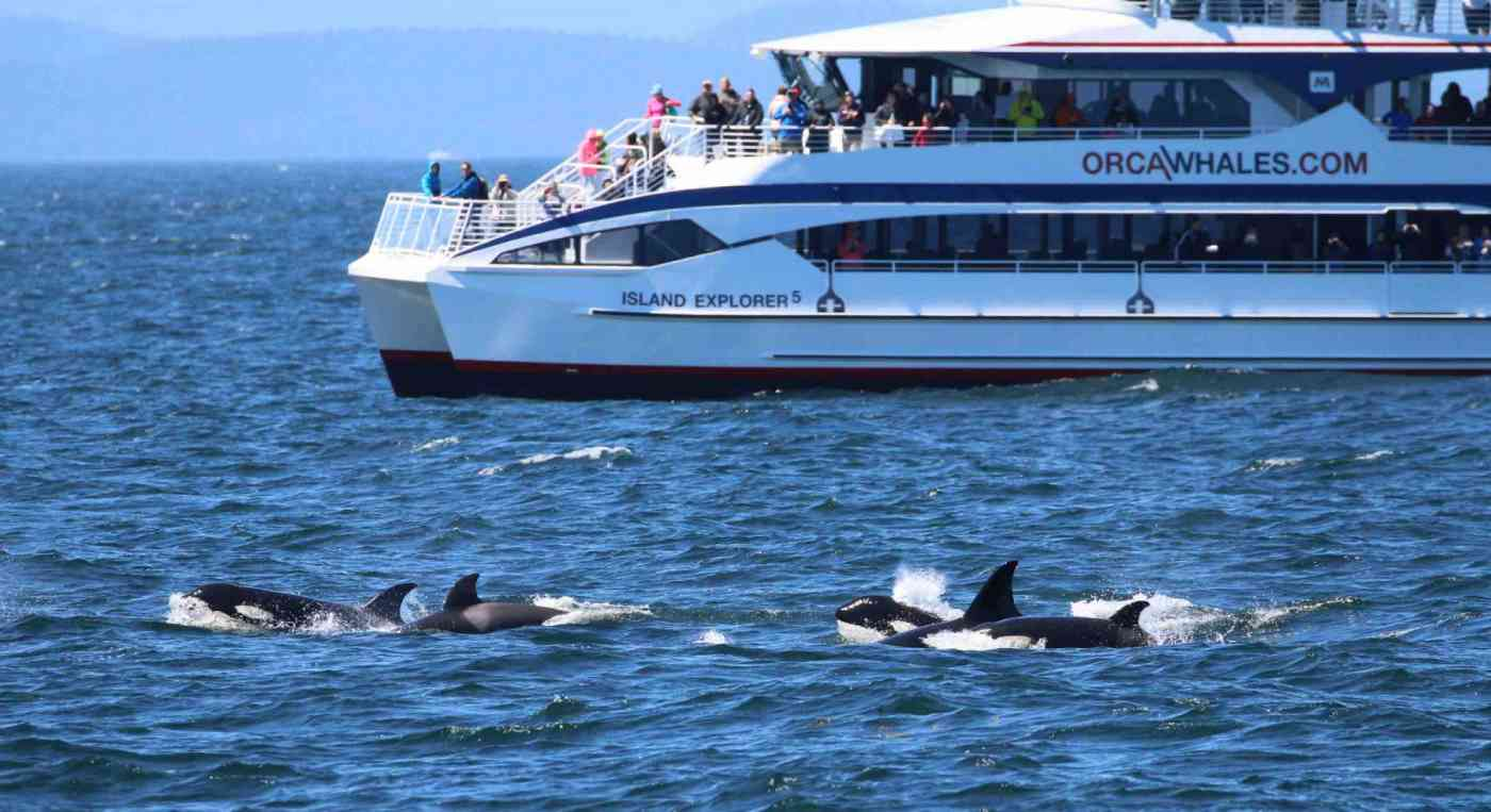 Washington State Whale Watching Island Explorer 5