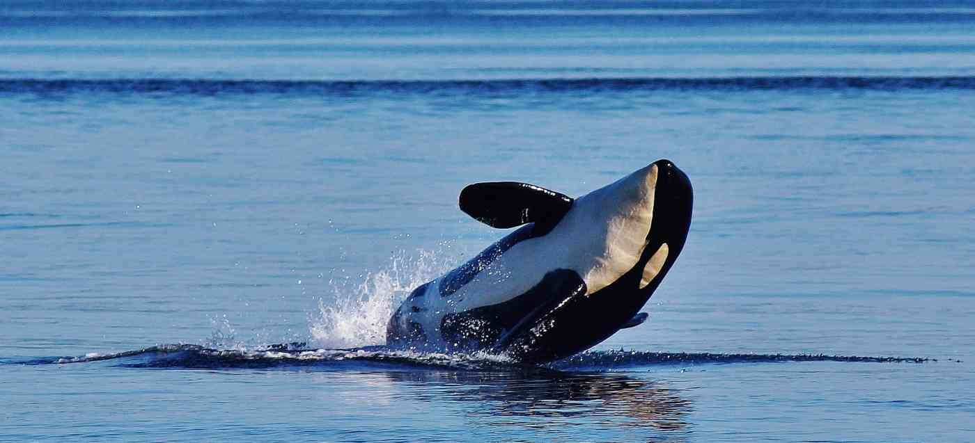 Orca Guarantee Banner