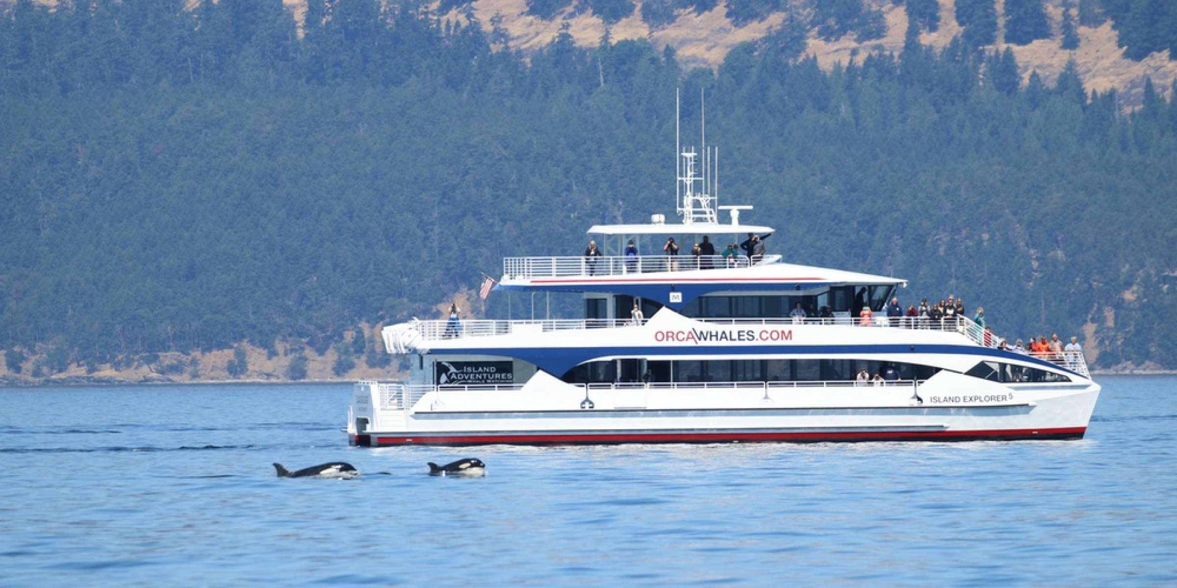 Island Adventures Whale Watching Ie5 1