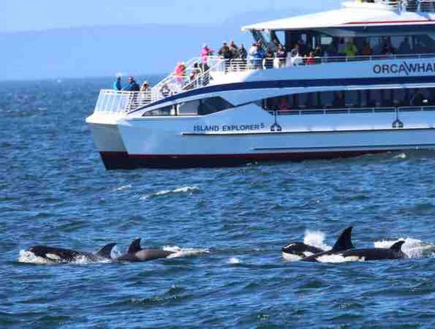Anacortes Whale Watching Island Explorer 5