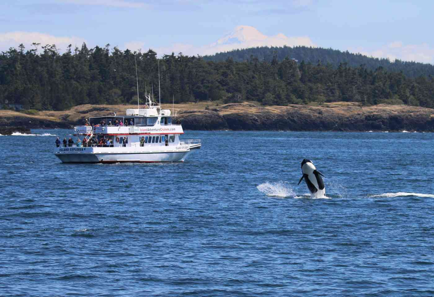 Ie4 Orca Breach