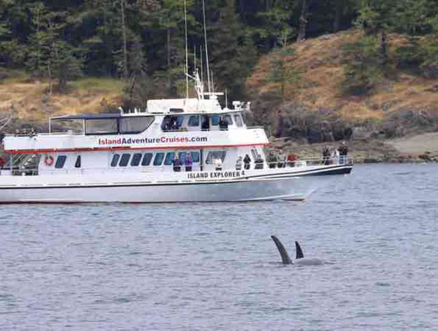 San Juan Islands Whale Watching Island Explorer 4