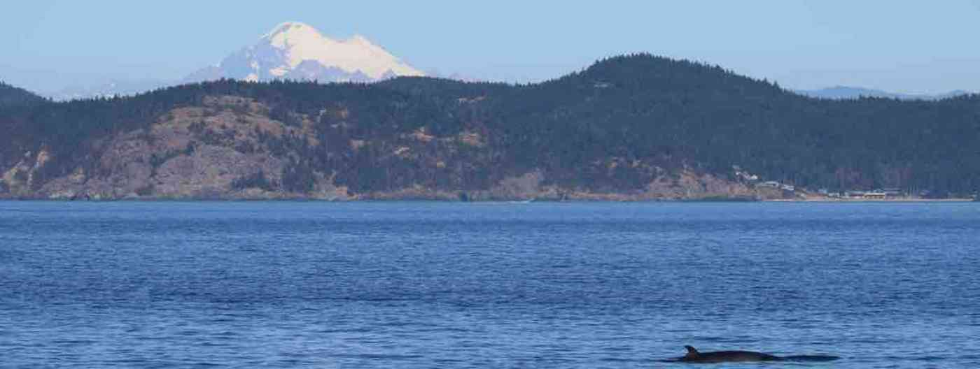 San Juan Islands Whale Watching Minke Whales