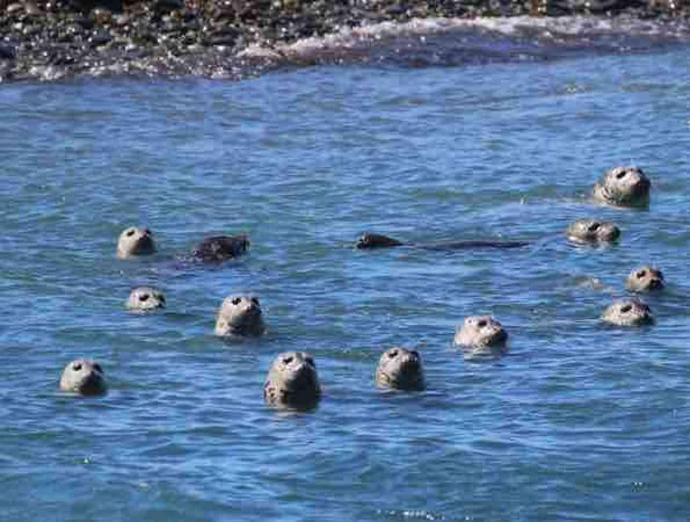 San Juan Islands Whale Watching Wildlife