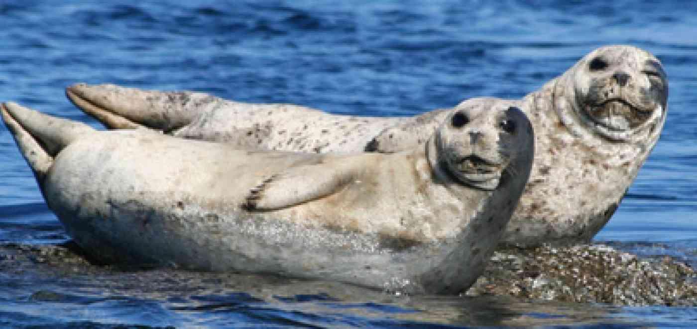 Pnw Wildlife Seal
