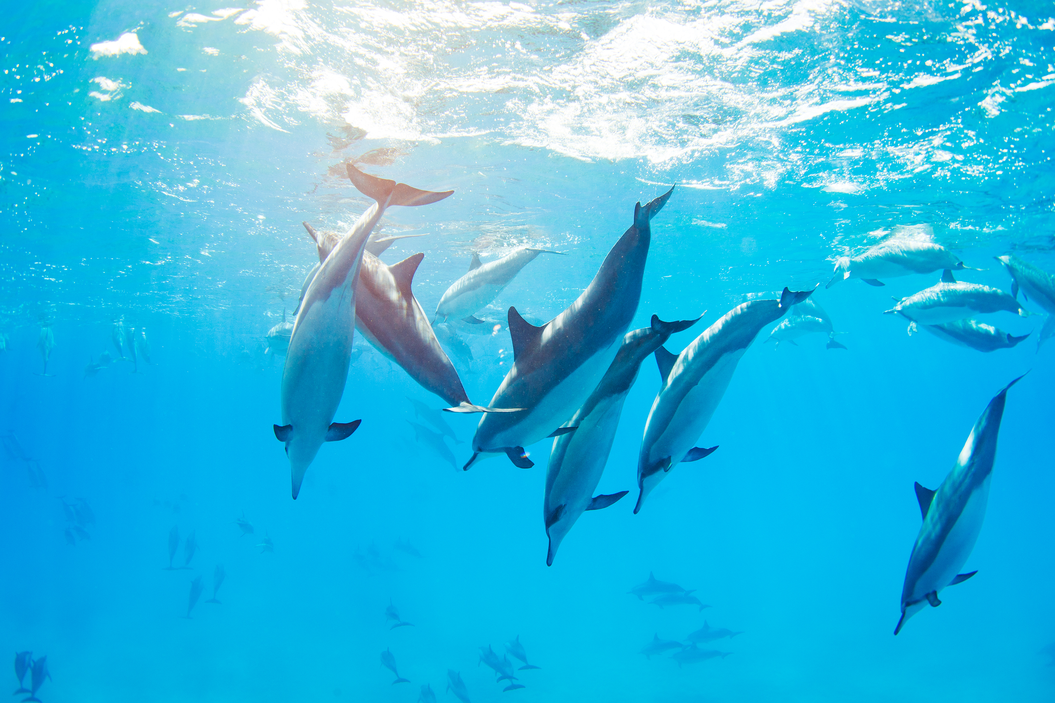 A dolphin ocean tour is part of the package