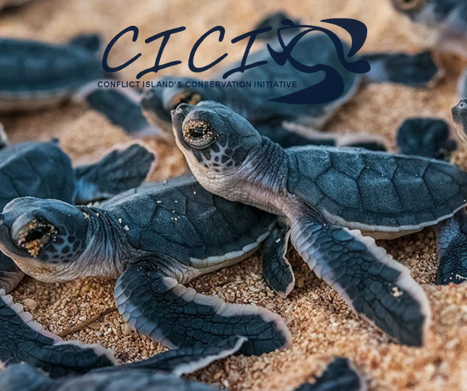 Conflict Island Conservation Iniataive