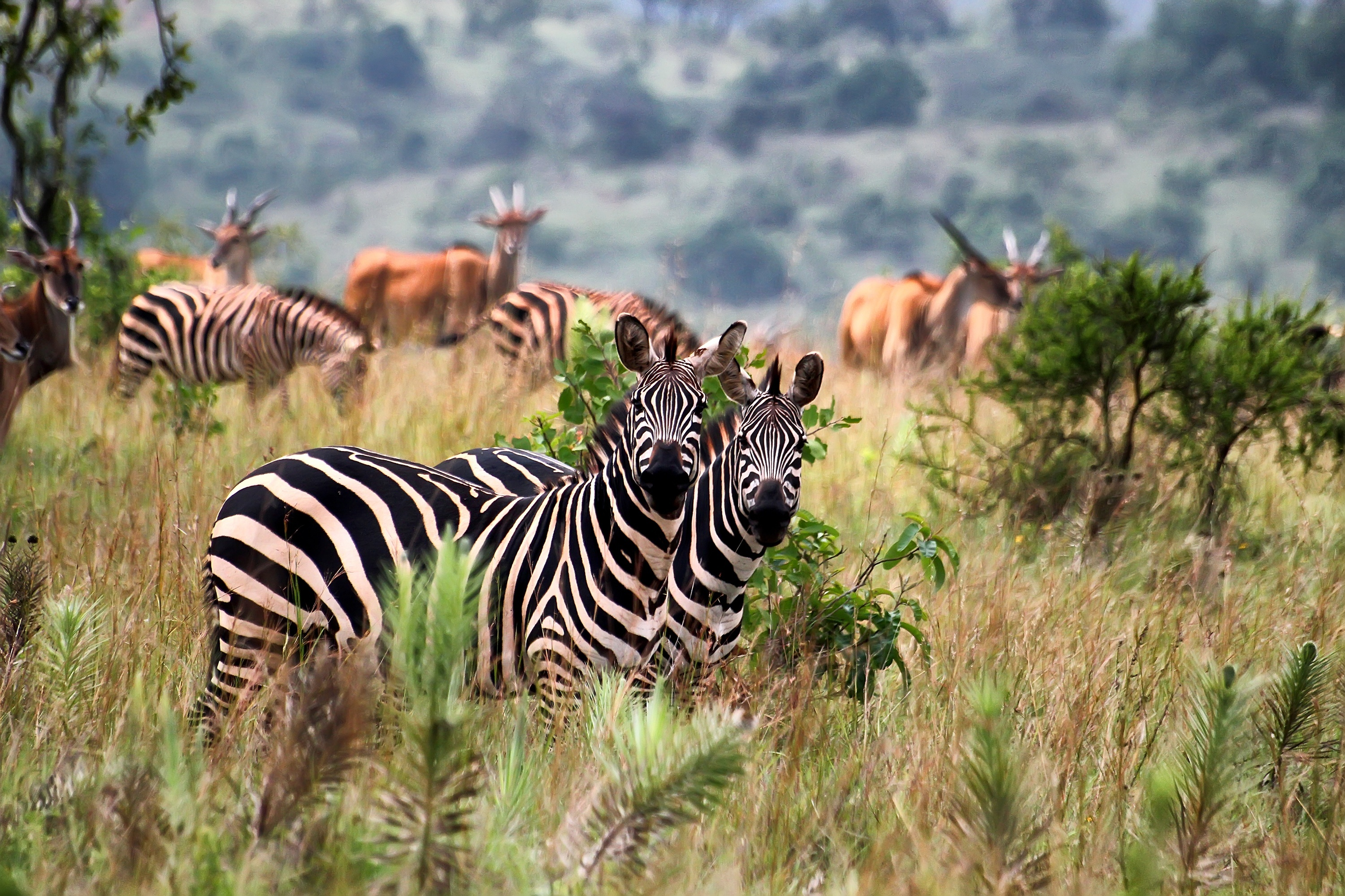 Game Drives in Akagera National Park