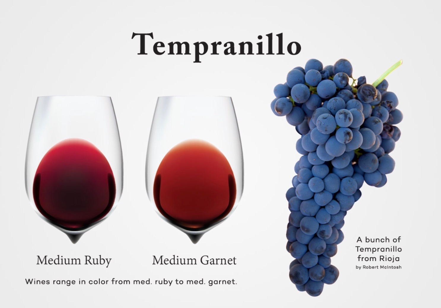 A bunch of Tempranillo grapes from Rioja