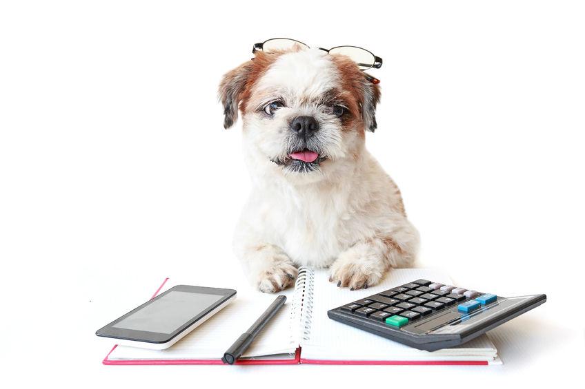 dog calculator