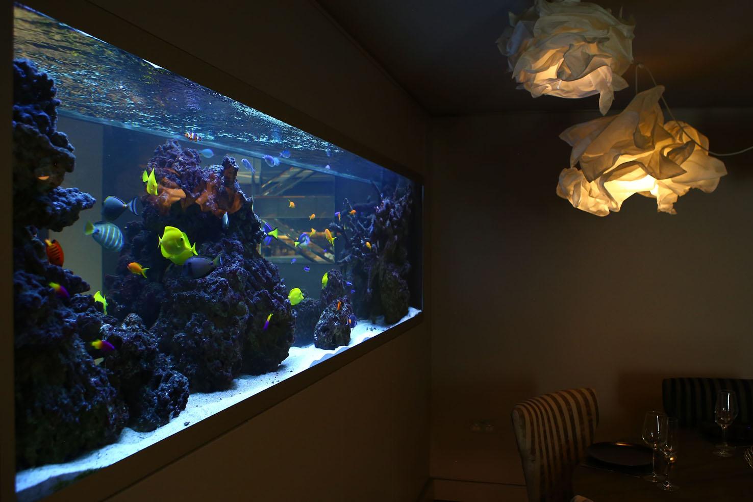 Bespoke aquariums