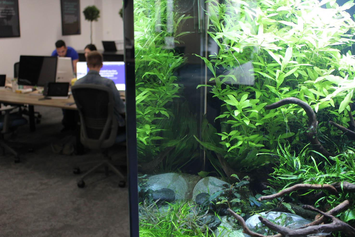 Bespoke office aquarium