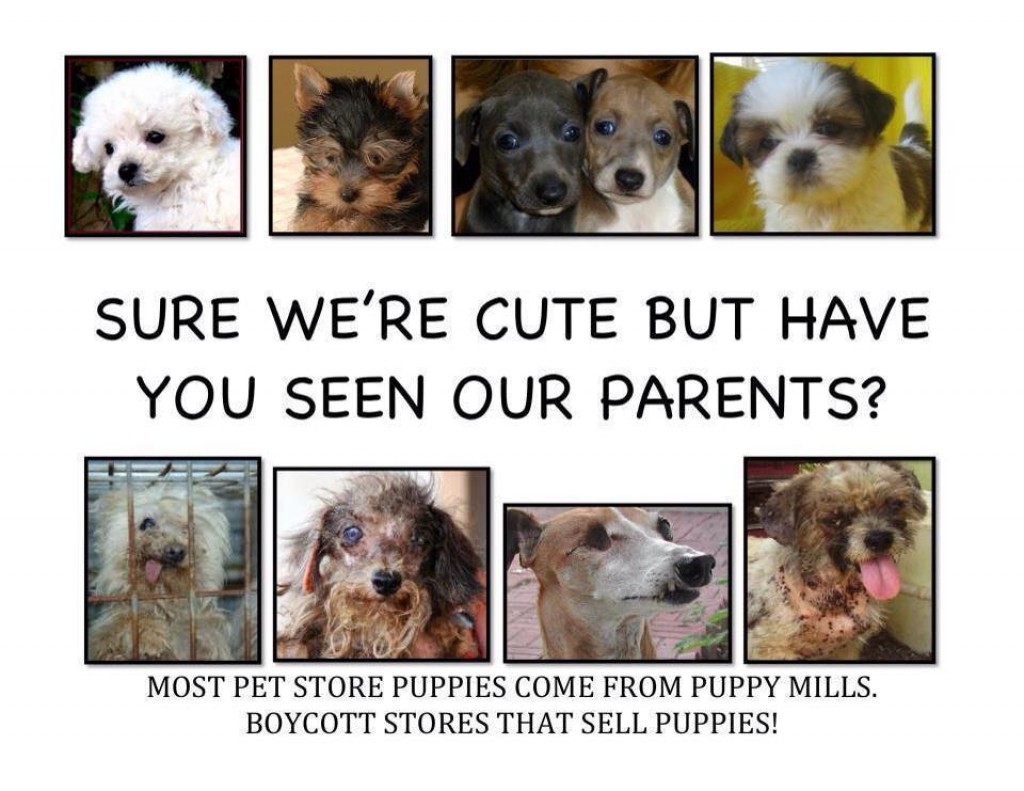 national puppy mill awareness day issuewire. Black Bedroom Furniture Sets. Home Design Ideas