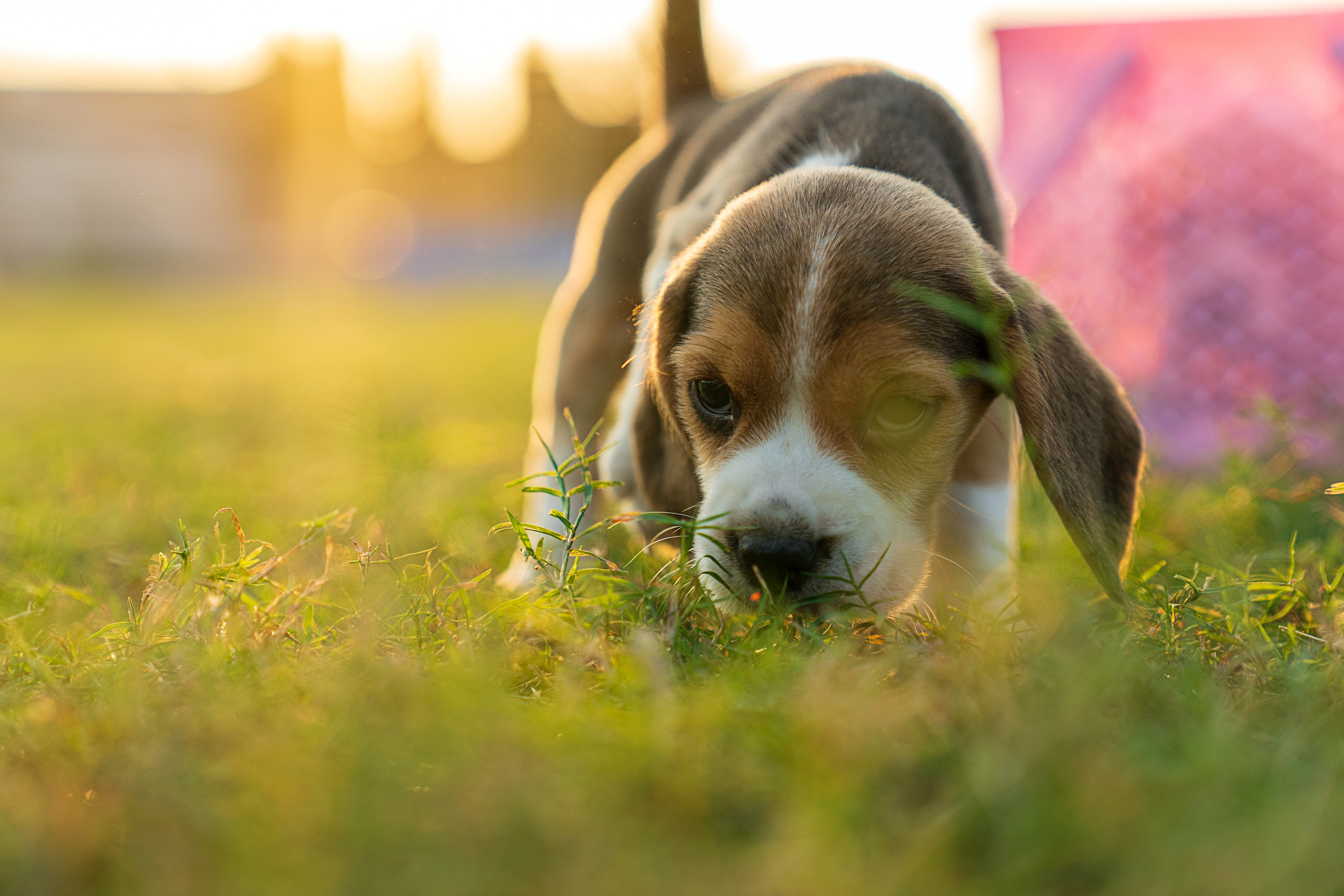 Dog Adoption Has Increased by 12 Over the Course of the Pandemic