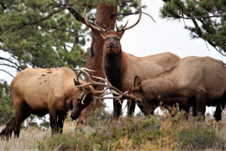 Rocky Mountain National Park Tour from Denver