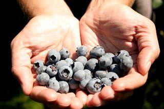 Berries 014
