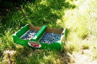 Berries 003