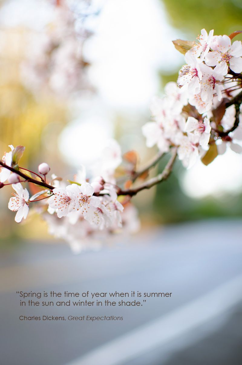 Cherryblossom-with-text