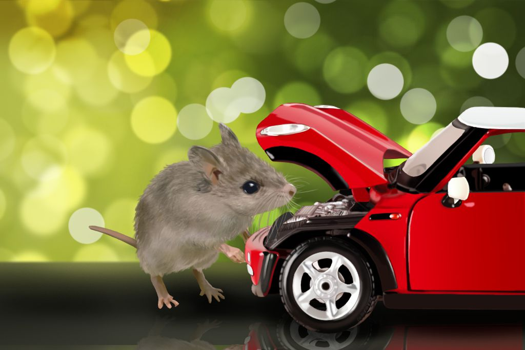 how to keep rodents out of your car jerry advice. Black Bedroom Furniture Sets. Home Design Ideas