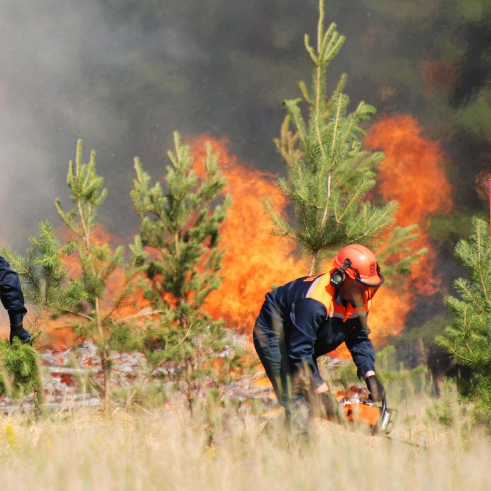 Wildland firefighters work fast to slow a forest fire.