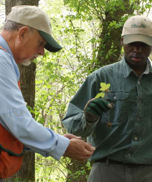 An Advanced Forestry Technician inspects the health of the tree seedlings in a forest